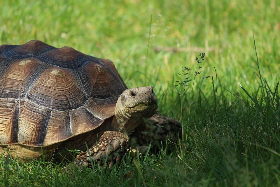 le soleil en capricorne symbole tortue